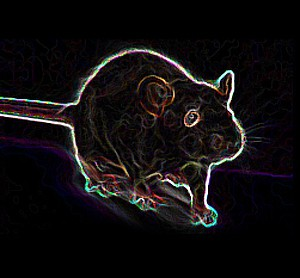 rat_0001_Layer 2